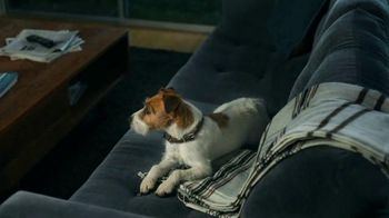 Xfinity My Account App TV Spot, 'Max and His Dog' - Thumbnail 1