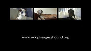 Adopt a Greyhound.org TV Spot, 'Long-Term Commitment' - Thumbnail 7