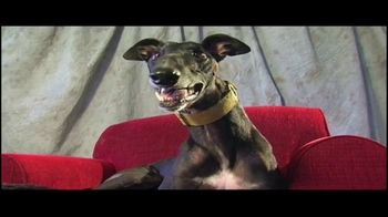 Adopt a Greyhound.org TV Spot, 'Long-Term Commitment' - Thumbnail 2