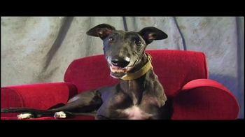 Adopt a Greyhound.org TV Spot, 'Long-Term Commitment' - Thumbnail 3