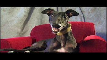 Adopt a Greyhound.org TV Spot, 'Long-Term Commitment' - Thumbnail 4