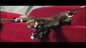 Adopt a Greyhound.org TV Spot, 'Long-Term Commitment' - Thumbnail 5