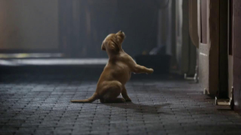 Budweiser Super Bowl 2014 TV Spot, 'Puppy Love' - Thumbnail 3