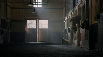 Budweiser Super Bowl 2014 TV Spot, 'Puppy Love' - Thumbnail 4