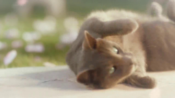 Sheba TV Spot, 'Cat Heaven' - Thumbnail 3