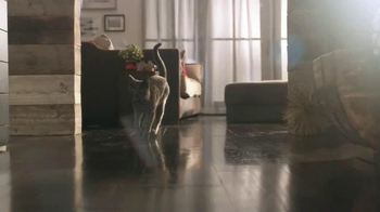 Sheba TV Spot, 'Cat Heaven' - Thumbnail 5