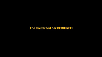 Pedigree TV Spot, 'Riley' - Thumbnail 4