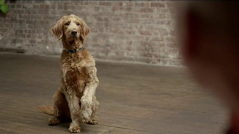 JPMorgan Chase TV Spot, 'Chase Mastery: Dog Trainer' Feat. Joel Silverman - Thumbnail 1