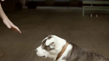 JPMorgan Chase TV Spot, 'Chase Mastery: Dog Trainer' Feat. Joel Silverman - Thumbnail 2