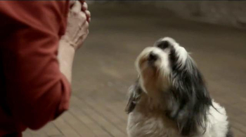 JPMorgan Chase TV Spot, 'Chase Mastery: Dog Trainer' Feat. Joel Silverman - Thumbnail 3
