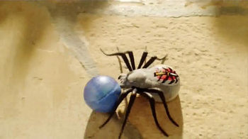 Wild Pets Spider TV Spot, 'Freak Out Your Family' - Thumbnail 7