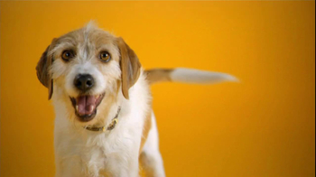 Pedigree TV Spot For The Love Of Dogs - Thumbnail 1