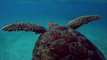 Oceana TV Spot For Sea Turtles Featuring Rachael Harris and Angela Kinsey