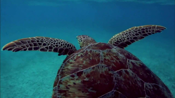 Oceana TV Spot For Sea Turtles Featuring Rachael Harris and Angela Kinsey