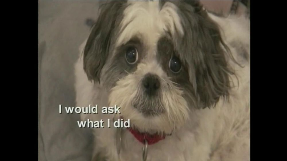 ASPCA TV Commercial For If Animals Could Speak