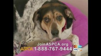 ASPCA TV Spot For If Animals Could Speak - Thumbnail 10