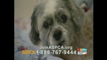 ASPCA TV Spot For If Animals Could Speak - Thumbnail 8