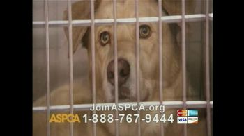 ASPCA TV Spot For If Animals Could Speak - Thumbnail 9
