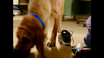 PetSmart TV Spot For Bloodhound Sniff - Thumbnail 1