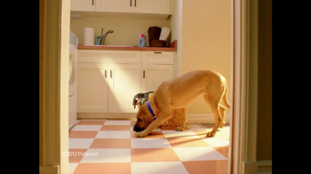 PetSmart TV Spot For Bloodhound Sniff - Thumbnail 2