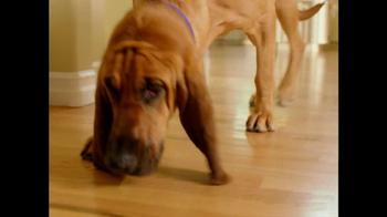 PetSmart TV Spot For Bloodhound Sniff - Thumbnail 3