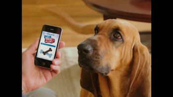 Bloodhound Sniff thumbnail