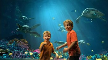 SeaWorld One Adventures TV Spot - Thumbnail 6