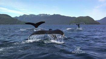 Pacific Life TV Spot, 'Whales' - Thumbnail 4
