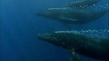 Pacific Life TV Spot, 'Whales' - Thumbnail 5