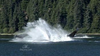 Pacific Life TV Spot, 'Whales' - Thumbnail 7