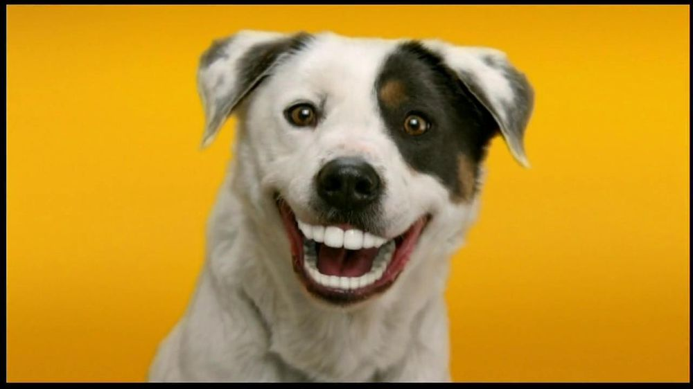Who Is The Voice Of Pedigree Dentastix Dog Food Commercials