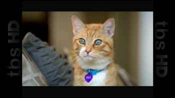 The Shelter Pet Project TV Spot, 'Cat Sandbox' - Thumbnail 4