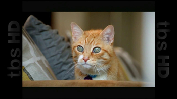 The Shelter Pet Project TV Spot, 'Cat Sandbox' - Thumbnail 8