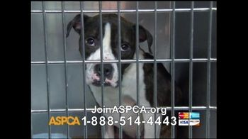 ASPCA TV Spot For Neglect and Abused Animals - Thumbnail 8