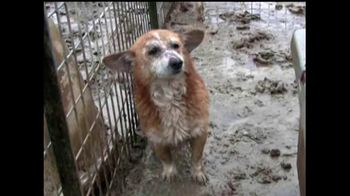 ASPCA TV Spot For Neglect and Abused Animals - Thumbnail 3