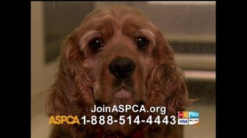 ASPCA TV Spot For Neglect and Abused Animals - Thumbnail 4