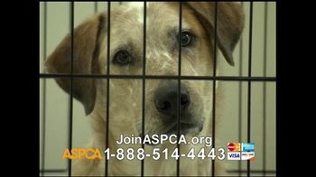 ASPCA TV Spot For Neglect and Abused Animals - Thumbnail 6