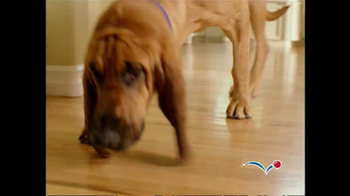 PetSmart TV Spot For Pet Perks Deal Alert - Thumbnail 1