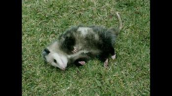 GEICO TV Spot, 'Pet Possum' - 2 commercial airings