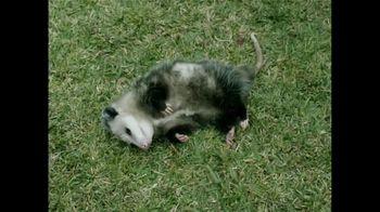 GEICO TV Spot, 'Pet Possum' - Thumbnail 3