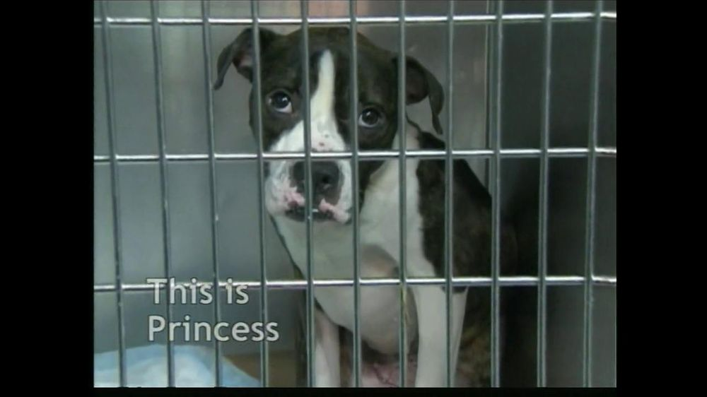 ASPCA TV Commercial For The Innocent Ones