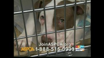 ASPCA TV Spot For The Innocent Ones - Thumbnail 9
