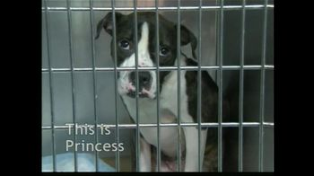 ASPCA TV Spot For The Innocent Ones - Thumbnail 4