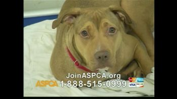 ASPCA TV Spot For The Innocent Ones - Thumbnail 8