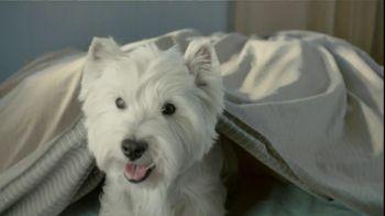 Cesar TV Spot For Canine Cuisine With Lola - Thumbnail 2