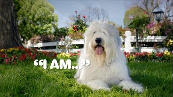 Iams TV Spot, \'Animal Protein To Eat Like Dogs\'