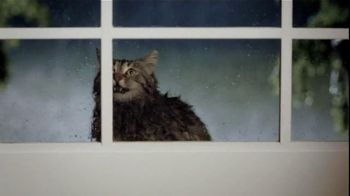 Purina TV Spot For Cat Chow Complete Featuring The Hutchison Family - Thumbnail 3