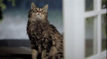 Purina TV Spot For Cat Chow Complete Featuring The Hutchison Family - Thumbnail 4