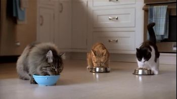 Purina TV Spot For Cat Chow Complete Featuring The Hutchison Family - Thumbnail 7