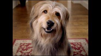 PetSmart TV Spot For Big Brands Bonus Sale - Thumbnail 2